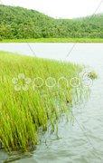Grand Etang lake, Grand Etang National Park, Grenada Stock Photos