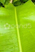 Leaf, Grenada Stock Photos