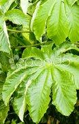 Leaves, Grenada Stock Photos