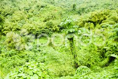 Inland of Grenada, Caribbean Stock Photos