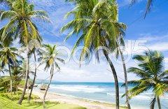 Bathsheba, Eastern coast of Barbados, Caribbean Stock Photos