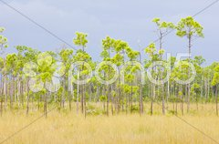 Everglades National Park, Florida, USA Stock Photos