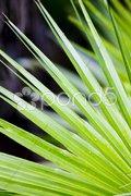 Detail of leave, Everglades National Park, Florida, USA Stock Photos