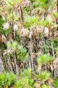 Vegetation in Everglades National Park, Florida, USA Stock Photos