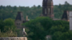 New Brunswick Government Legislature Background with Seagull in Foreground. Stock Footage