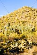 Saguaro National Park, Arizona, USA Stock Photos