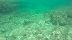 Under water, sea bottom, Mediterranean Sea. Greece, Crete Stock Footage