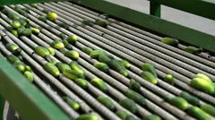 Automatic line for the canning industry.Preserving of Vegetables and Beans Stock Footage