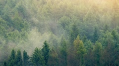 Sunset Forest With Mist Moving Across Stock Footage