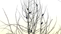 Seven toucans on the tree Stock Footage