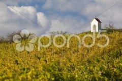 Vineyard near Hnanice, Znojmo Region, Czech Republic Stock Photos