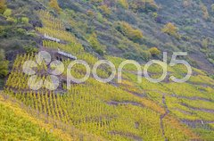 Vineyards in Moselle River Valley, Rheinland Pfalz, Germany Stock Photos