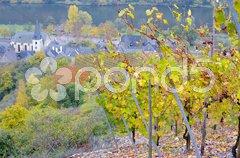 Vineyards near Pommern, Rheinland Pfalz, Germany Stock Photos