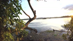 Children plunge into lake water from tree Stock Footage