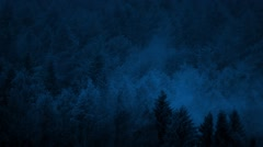Smoky Forest Late At Night Stock Footage