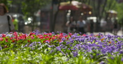 Bright flowers in focus as blurred pedestrians pass by in slow motion Stock Footage