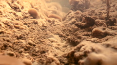 Colonies of Iron bacteria viewed underwater in a stream. Stock Footage