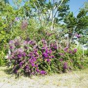 Botany garden, Jardin Bot Stock Photos