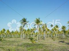 Parque Nacional Desembarco del Granma, Granma Province, Cuba Stock Photos