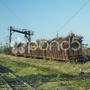 Wagons full of sugar cane, sugar railway, Niquero, Cuba Stock Photos