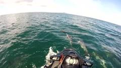 Dolphin Encounter Stock Footage