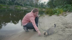 British Shorthair Tabby cat in collar walking on sand outdoor - plays with woman Stock Footage