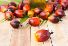 Commercial palm oil cultivation. Since palm oil contains more saturated fats Stock Photos