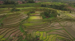 Aerial View of Jatiluwih Rice Terrace in Tabanan, Bali, Indonesia Stock Footage