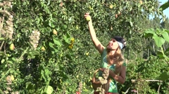 Woman gather pear fruit in eco garden. Summer garden harvest. 4K Stock Footage