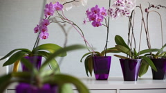 Beautiful purple, pink and white orchids in а violet vases on a white table. Stock Footage