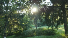 Forest with sunrays shining. Sun rays light shines through trees Stock Footage