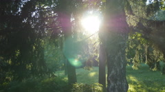Tracking shot in a thick deciduous forest. Sun glimmering through tree. Stock Footage
