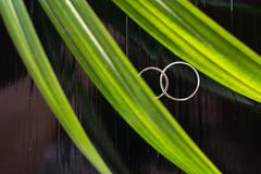 Wedding rings on black wood table with palm leaf foreground. selective focus. Stock Photos