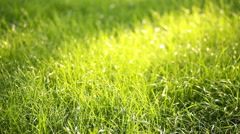 Evening grass with dew in summer park Stock Footage