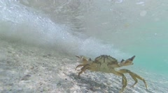 Crab under water Stock Footage