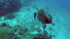 Turtle Swimming Under Water Stock Footage