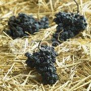 Grapes drying for straw wine (neronet), Biza Winery, Cejkovice, Czech Republic Stock Photos