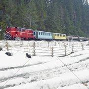 Narrow-gauge motor locomotive on wood railway, Viseu de Sus, Romania Stock Photos