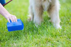 Owner Clearing Dog Mess With Pooper Scooper Stock Photos