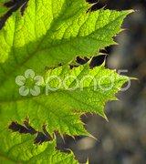 Detail of leaf, Keukenhof Gardens, Lisse, Netherlands Stock Photos