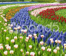 Keukenhof Gardens, Lisse, Netherlands Stock Photos