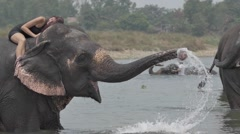 Girl have a shower on the elephant Stock Footage