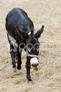 Donkey, Navarre, Spain Stock Photos