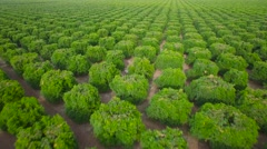 Aerial over seemingly endless rows of crops in Central California. Stock Footage