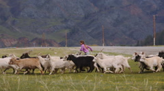 Girl and goats in the mountains Stock Footage