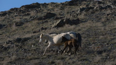 Horses with offspring in the mountains Stock Footage