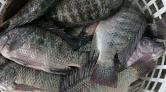 Fish in basket still alive Stock Footage