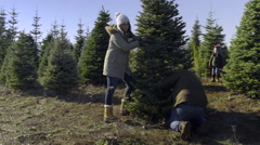 Dad Cuts Down Christmas Tree, Family Cheers, Little Boy Gives Dad A High Five Stock Footage