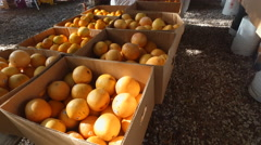 Orange, tangerines on a fresh market fruits Stock Footage