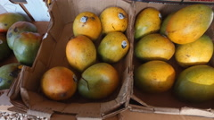 Fresh healthy mangos on street market  Stock Footage